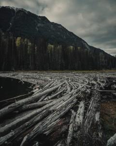 bosco-devastato