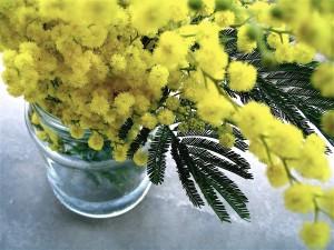 mimosa-8-03-19
