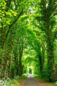 progetto-verde
