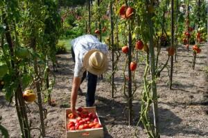 lavoratore-agricoltura3